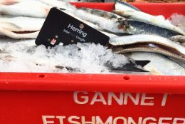 Food Producer Series – Gannet Fishmongers