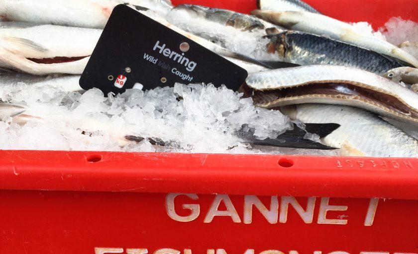 Food Producer Series – Gannet Fishmongers