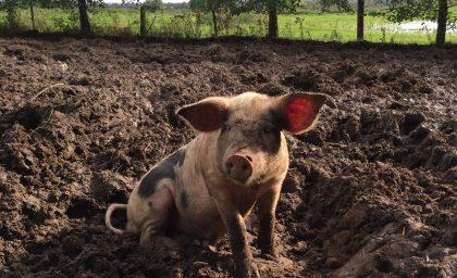 Food Producer Series – Old Farm